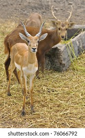 The deer at the zoo of Thailand.
