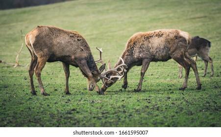 Deer-park Nove Hrady, Czech Republic - Shutterstock ID 1661595007