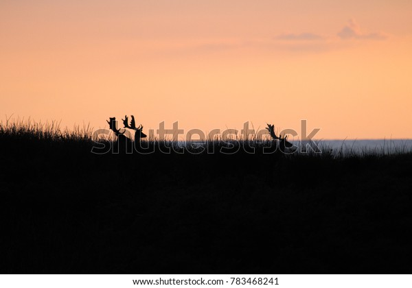 Deers in front of the sunset and sea