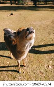 Deers in Nara Park / Japan