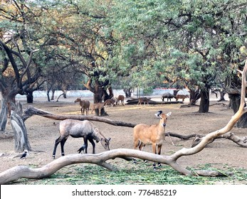 Deers and neel cows at the national zoological park,delhi,India