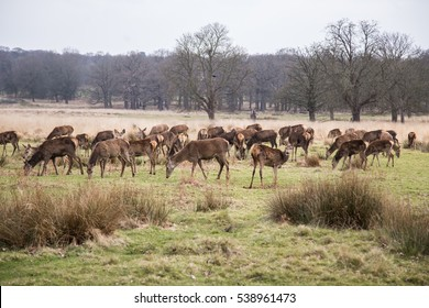 Deers roaming free in the outdoors park