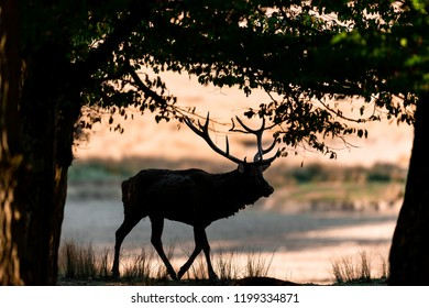 Conceptual Stylish Print  Stag Forest