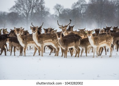 Deers in the snow