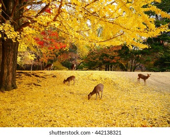 Deers standing on yellow leaves under tree in autumn,Nara,Japan