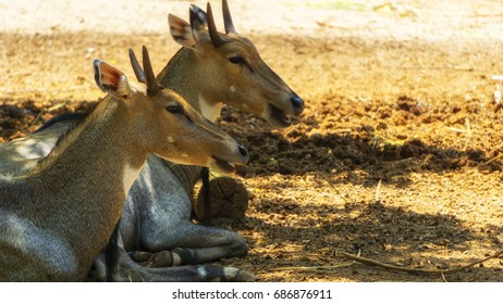 The deers are taking rest below shadow of the sun