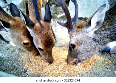 Deers that are eating