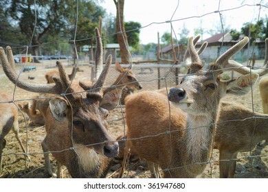 The deers are waiting for the food feeding hungrily