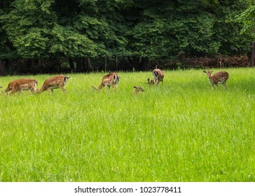 deers wildlife animal on green