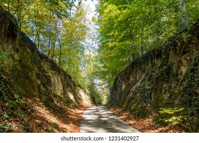 Defile road in the forest