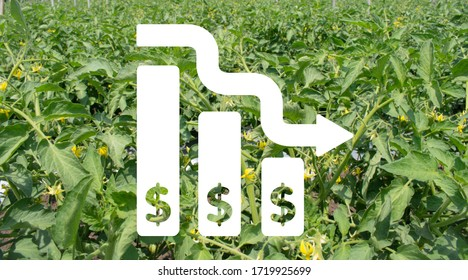 Deflation or bankruptcy concept in agribusiness. Currently Coronavirus pandemic affects on worlds agriculture.