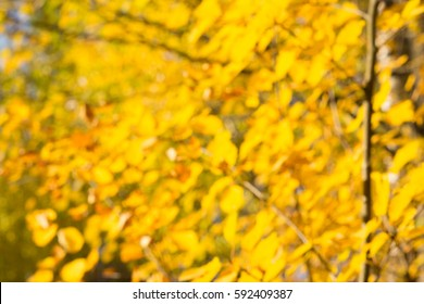 defocused background of trees in a park on a sunny autumn day