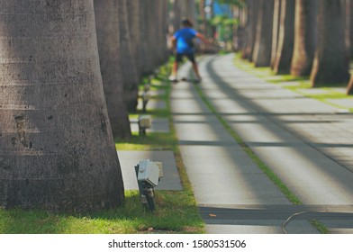 Defocused and blurred image for background of boy skating on skateboard in park with foreground of big palm trees shadow