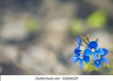Defocused blurred nature background with blue flowers in the corner, with space for text or image