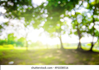 defocused bokeh background of garden with blossoming trees in sunny day, backdrop