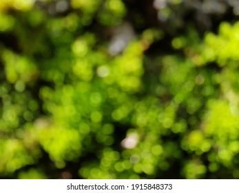defocused grass, defocused moss, defocused plant, defocused trees, blur photos