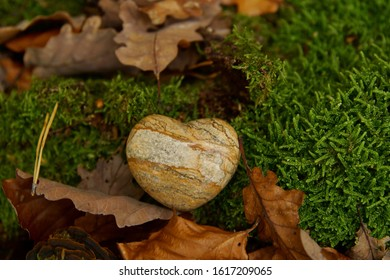 defocused Heart sympathy or stone funeral heart near a tree in autumn. Grave in the forest, Natural burial grave site, showing blank memorial plaque on grass or moss. tree burial concepts