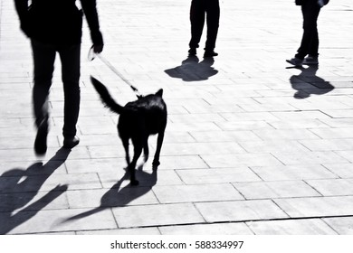 Defocused man and dog on a leash approaching two persons, in black and white from waist down