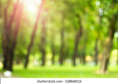 Defocused natural green tree background with sun beams.