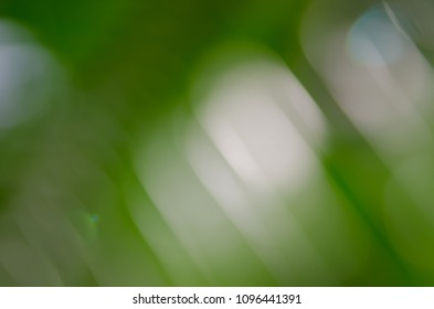 Defocused nature green background