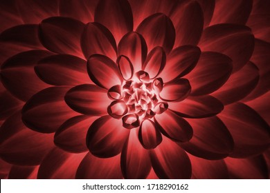 Defocused pastel, claret dahlia petals macro, floral abstract background. Close up of flower dahlia for background, Soft focus.