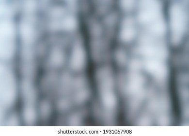 Defocused photography of a trees' trunks and branches in the winter public park. Concept of the beauty in nature in its silhouettes. Natural background. A lot of free space. Shine soft spring colors.