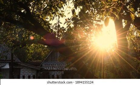 Defocused star shape sun with golden shiny long rays and sun flare among tree branches with fresh leaves. Tranquil sunset in farmhouse orchard. Cinematic shot of golden hour rural landscape