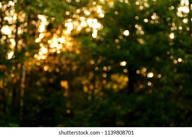Defocused trees illuminated by sunlight while sunset