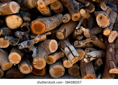 Deforest. global warming. firewood.  Eucalyptus.cut down trees