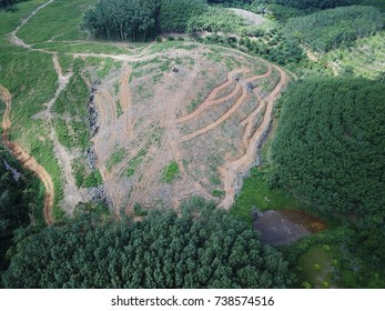 Deforestation. Aerial drone photo of rainforest logging for oil palm plantations,