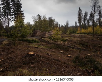 Deforestation area in Czech Republic