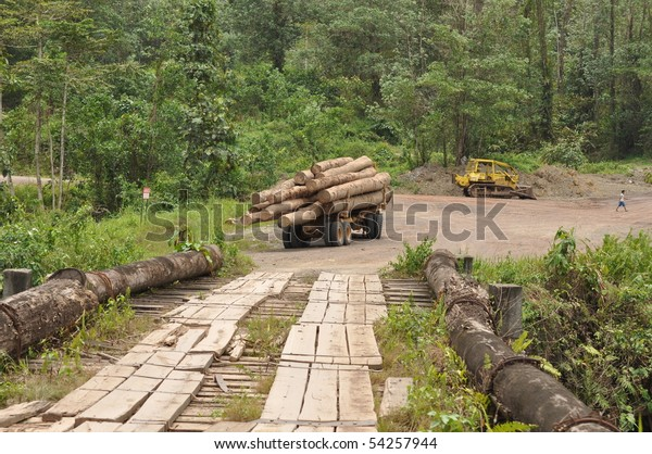 deforestation Borneo Clearance of the forest