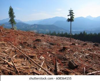 Deforestation in British Columbia, Canada