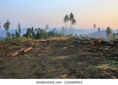 Deforestation in Carpathian Mountains. ecological problems of deforestation in the Carpathians