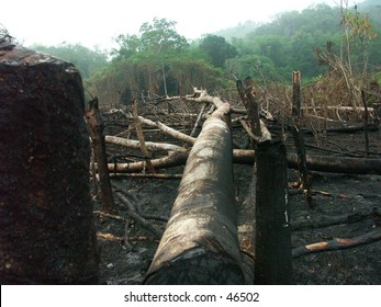 Deforestation: Cause of illegal logging and illegal burning