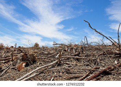 Deforestation concept image consisting of felled trees and a blue sky background.