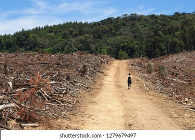 Deforestation concept image consisting of an unrecognizable women walking among felled trees in a forestry.