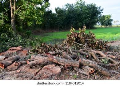 Deforestation, Destruction of Deciduous Forests. Damage to Nature