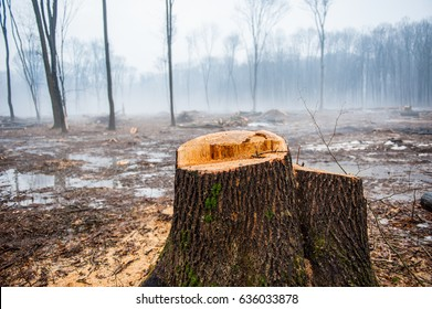 Deforestation, Destruction of Deciduous Forests. Damage to Nature. Ukraine. Europe.