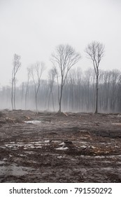 Deforestation, Destruction of Deciduous Forests. Damage to Nature. Ukraine. Europe. Pollution.