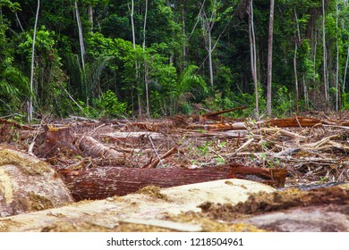 Deforestation and Environmental Conservation