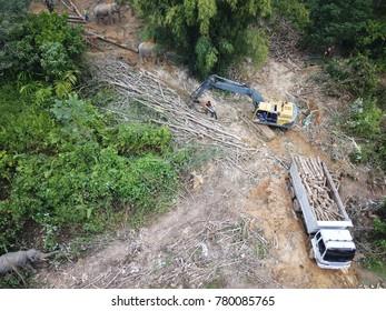 Deforestation environmental destruction of rainforest