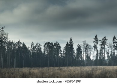 deforestation environmental disaster. Dark sky in winter