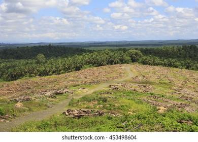 Tropical Terrasse Images, Stock Photos & Vectors   Shutterstock