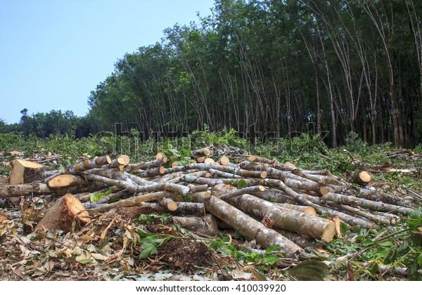 Problème environnemental du déboisement, forêt tropicale détruite pour les plantations de palmiers à huile