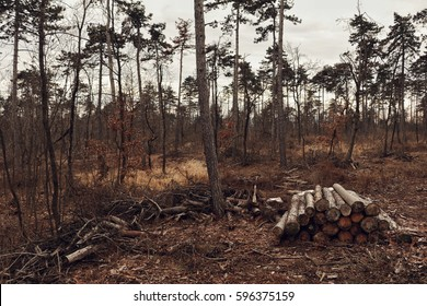 Deforestation in the forest