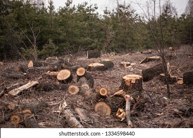 Deforestation, forest clearing