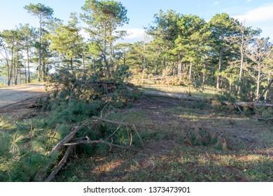 Devastated Jungle Images, Stock Photos & Vectors | Shutterstock