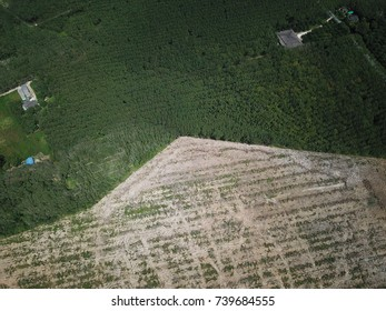 Deforestation, logging. Aerial view, environmental destruction of forest
