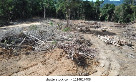 Deforestation. Logging of Borneo rainforest
